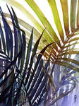 Arecaceae - household jungle in violets #3
