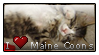 I -heart- Maine Coons by isoldel