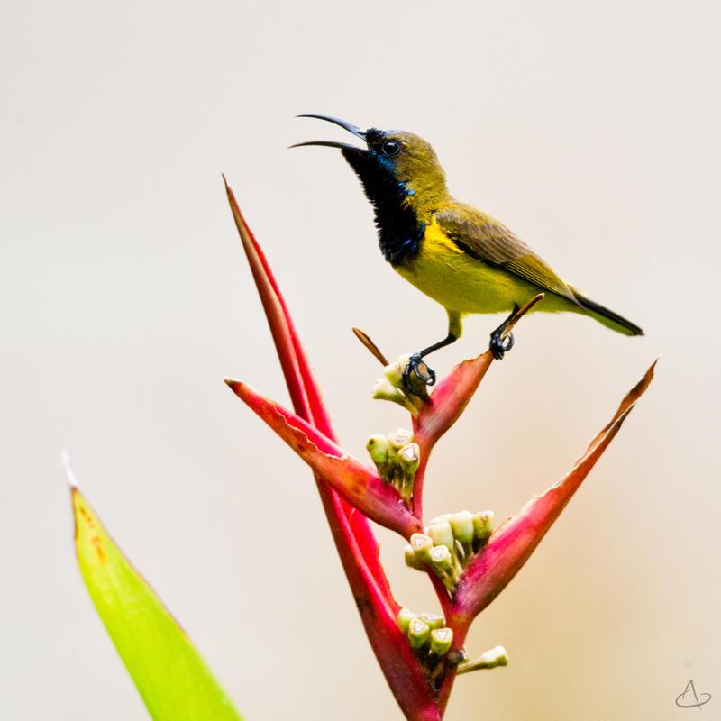 Bird 00 by kentnek
