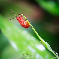 Insect 01 by kentnek