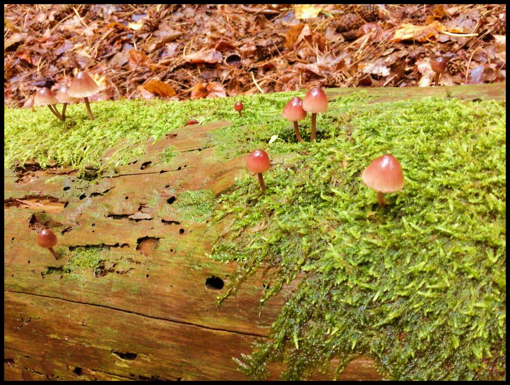 Mushrooms by Mandita219
