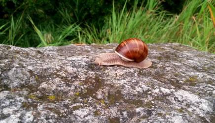 Roman Snail by SunriseCat