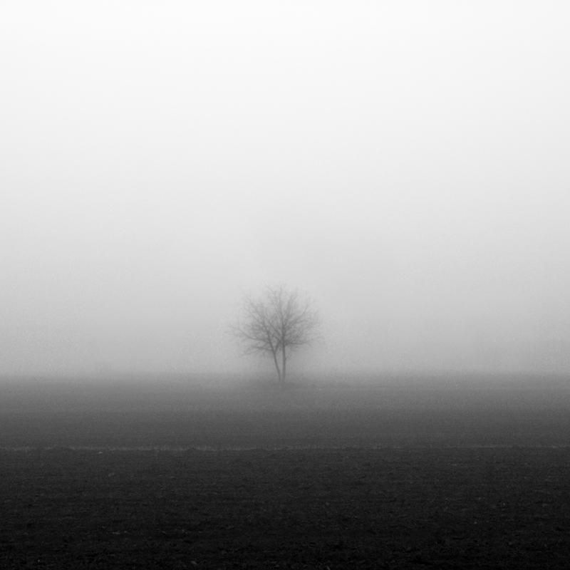 Tree in the fog. by ilsilenzio