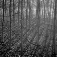 Light through the haze. by ilsilenzio