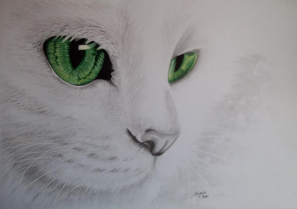White Cat by Angua33