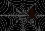 Spider Typography
