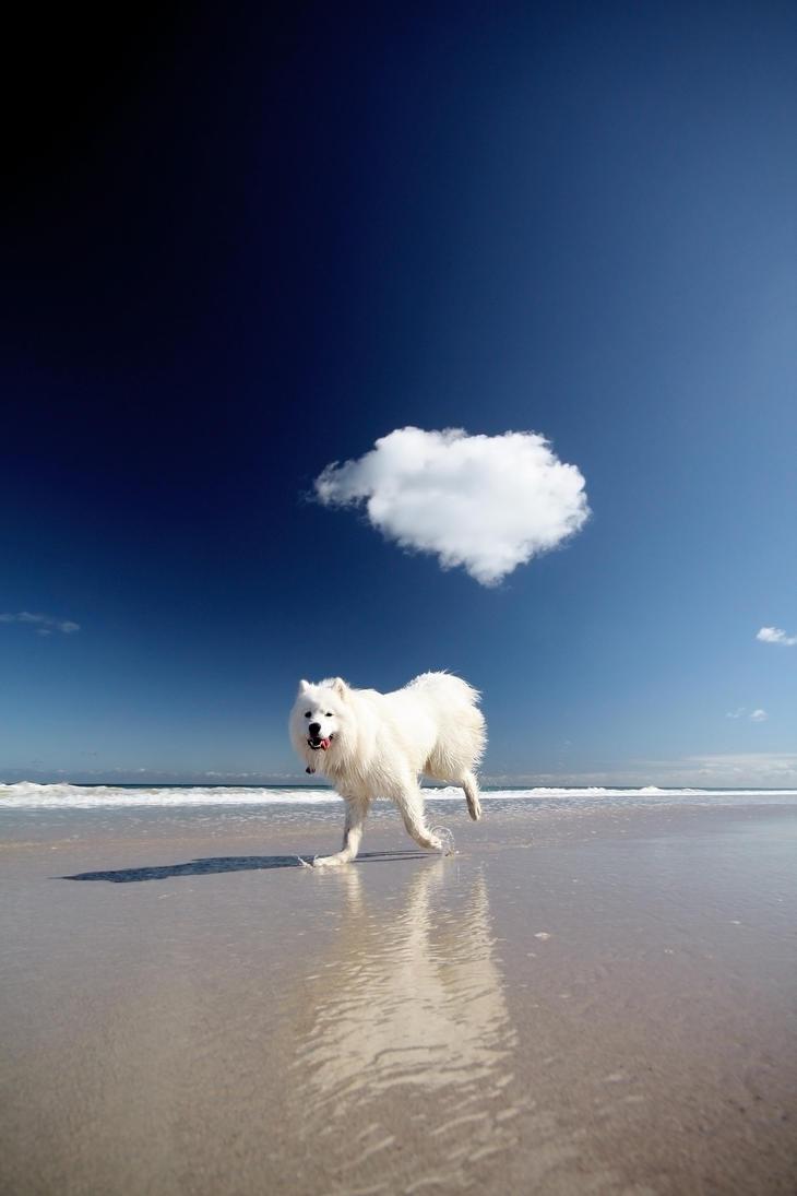 on cloud by bryan-cuttance