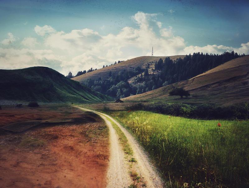Fantasy Field by ZLReynolds