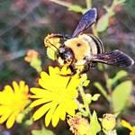 Bee-Utiful Wing Display