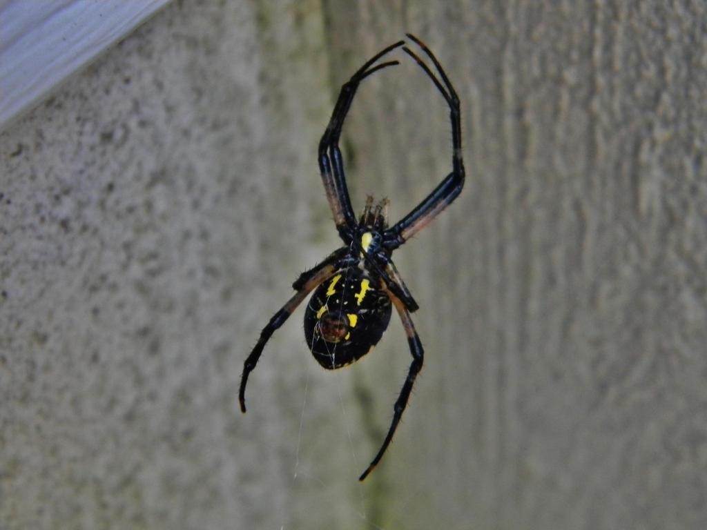 The Arachnid by Gothalla123