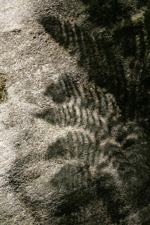 shadow fern by boreasz