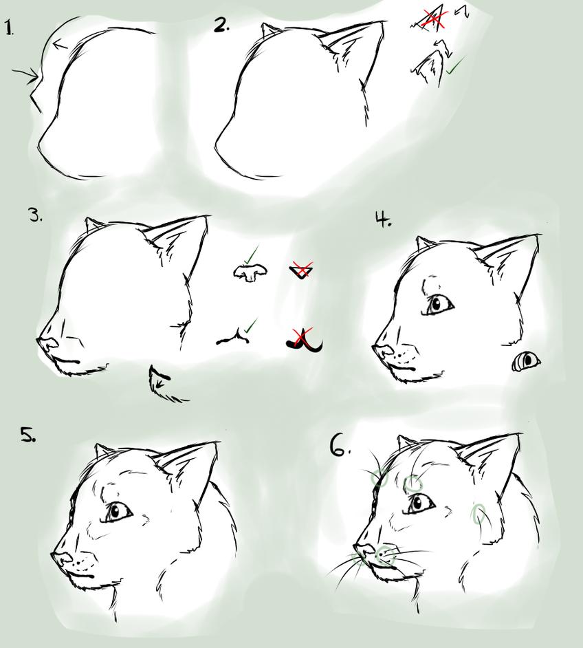 acfa cat shows