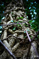 Wooden knot by melolonta