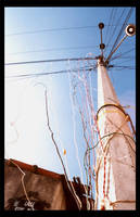 Hanging electricity by melolonta