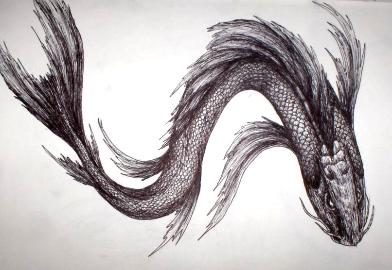 8da022acf4eed butterfly koi sketch by KING-ERIKisnoone on DeviantArt