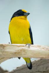 Masked Mystery Bird by OnTheTrail