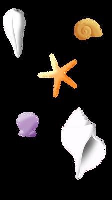 Seashell resource