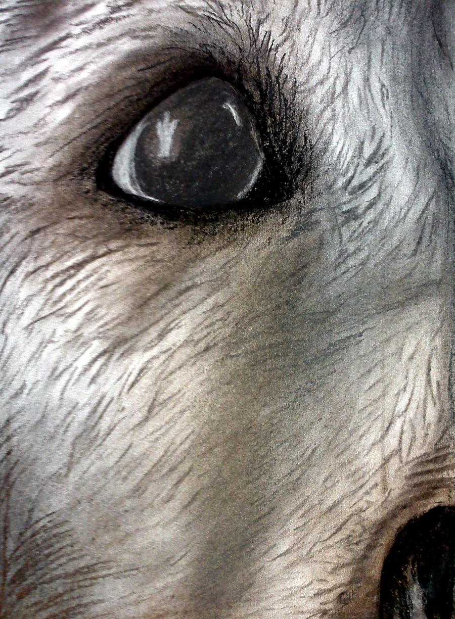dog eye by keijukuningatar on deviantart