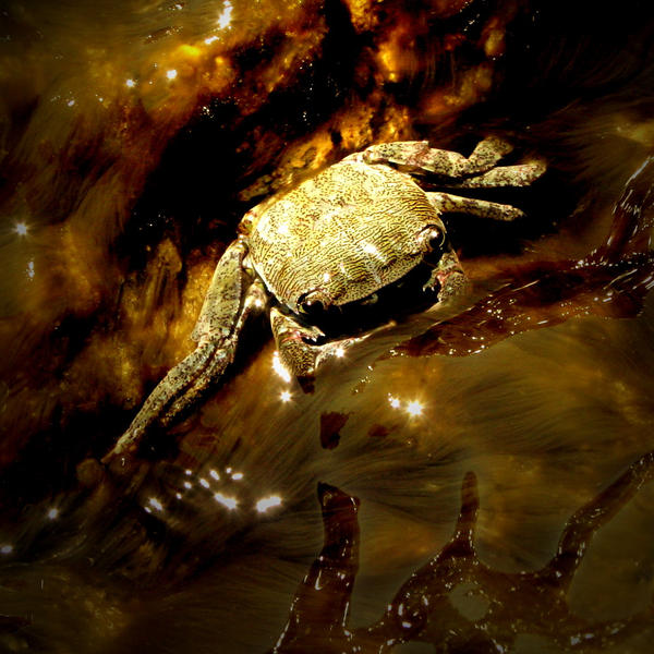 Mr Crab by LadyNutella