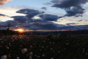 Cottonfield by simen91
