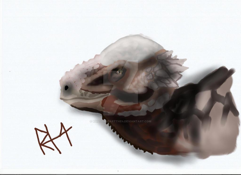 Pachycephalosaurus by RAPTORHEARTthe4