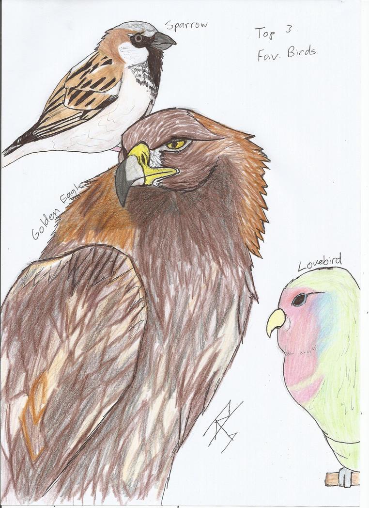 Top 3 favourite birds by RAPTORHEARTthe4