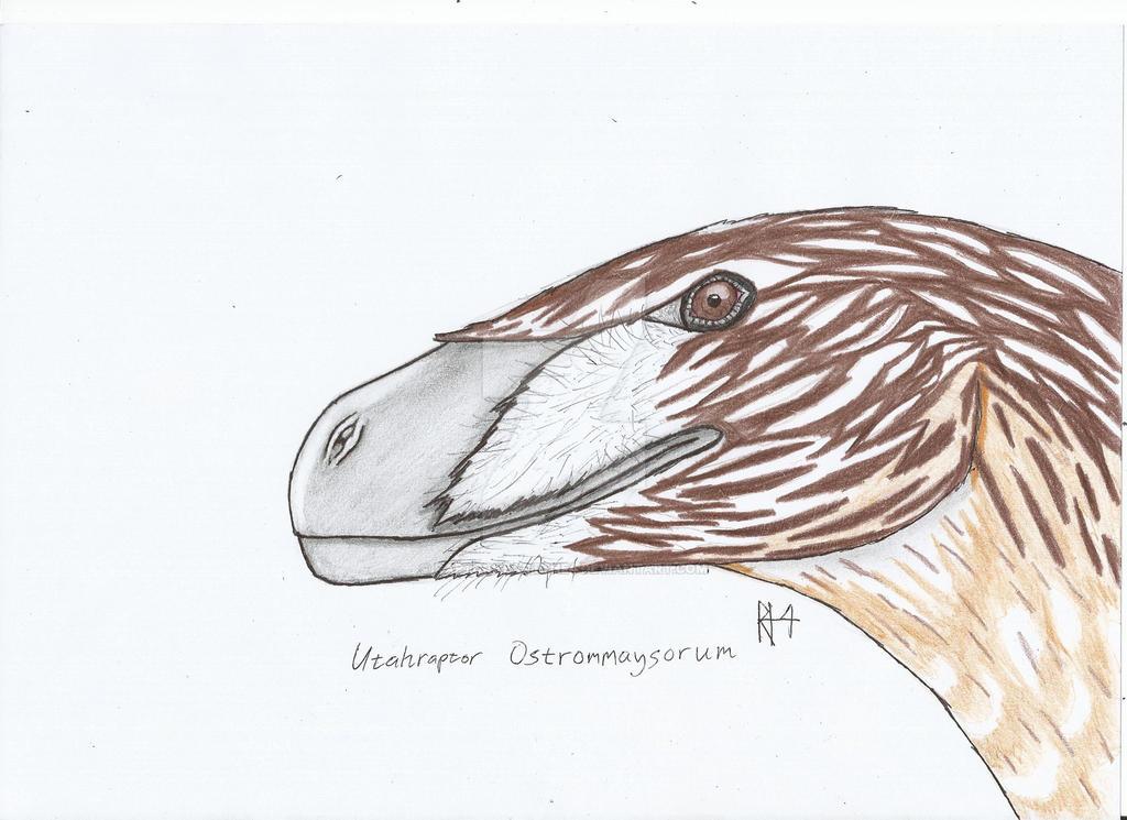 Dinosaurs:1 utahraptor ostrommaysorum by RAPTORHEARTthe4