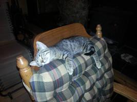 Sleepy kitten by KimMaida