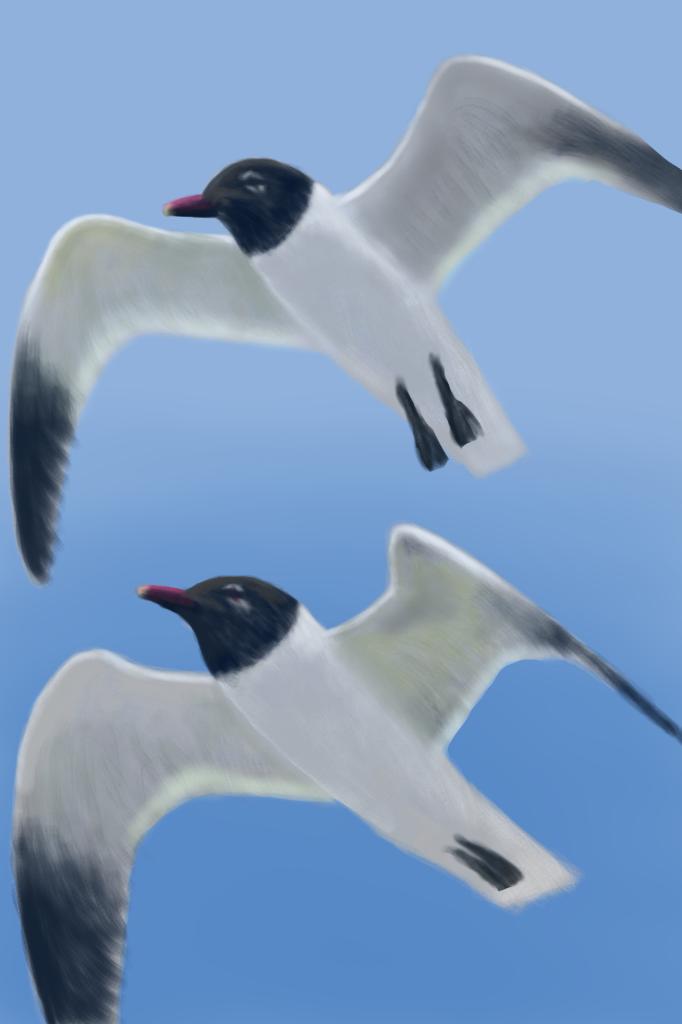 Seagulls by naca0012
