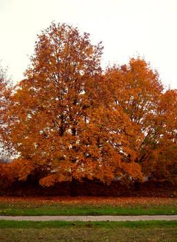 Autumn Trees 03