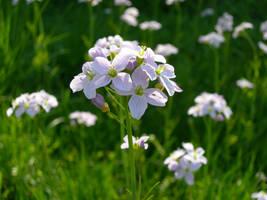 Flower reupload by kuschelirmel-stock