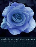 Blue by kuschelirmel-stock