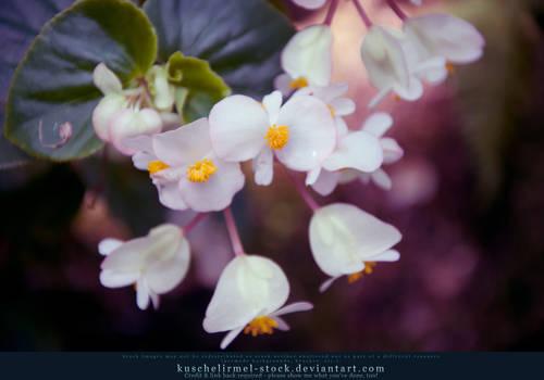 Small light Flowers
