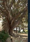 Old Tree 02