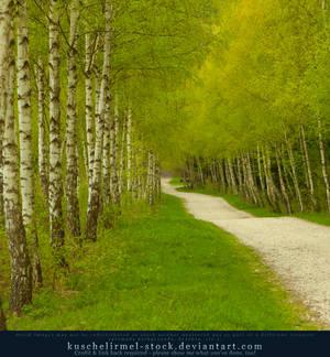 Spring Path 01