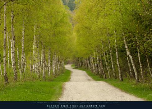 Spring Path 02