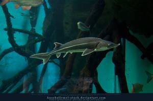 Go Fish - fish are friends by kuschelirmel-stock