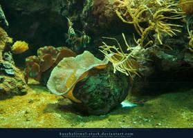 Underwater Reef 02 by kuschelirmel-stock