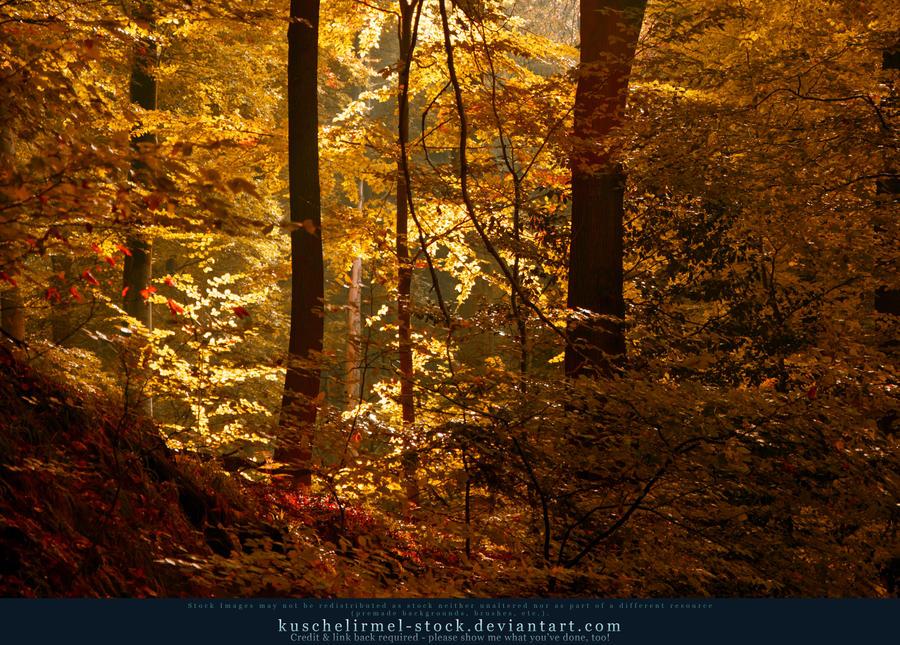 Autumn 04 by kuschelirmel-stock