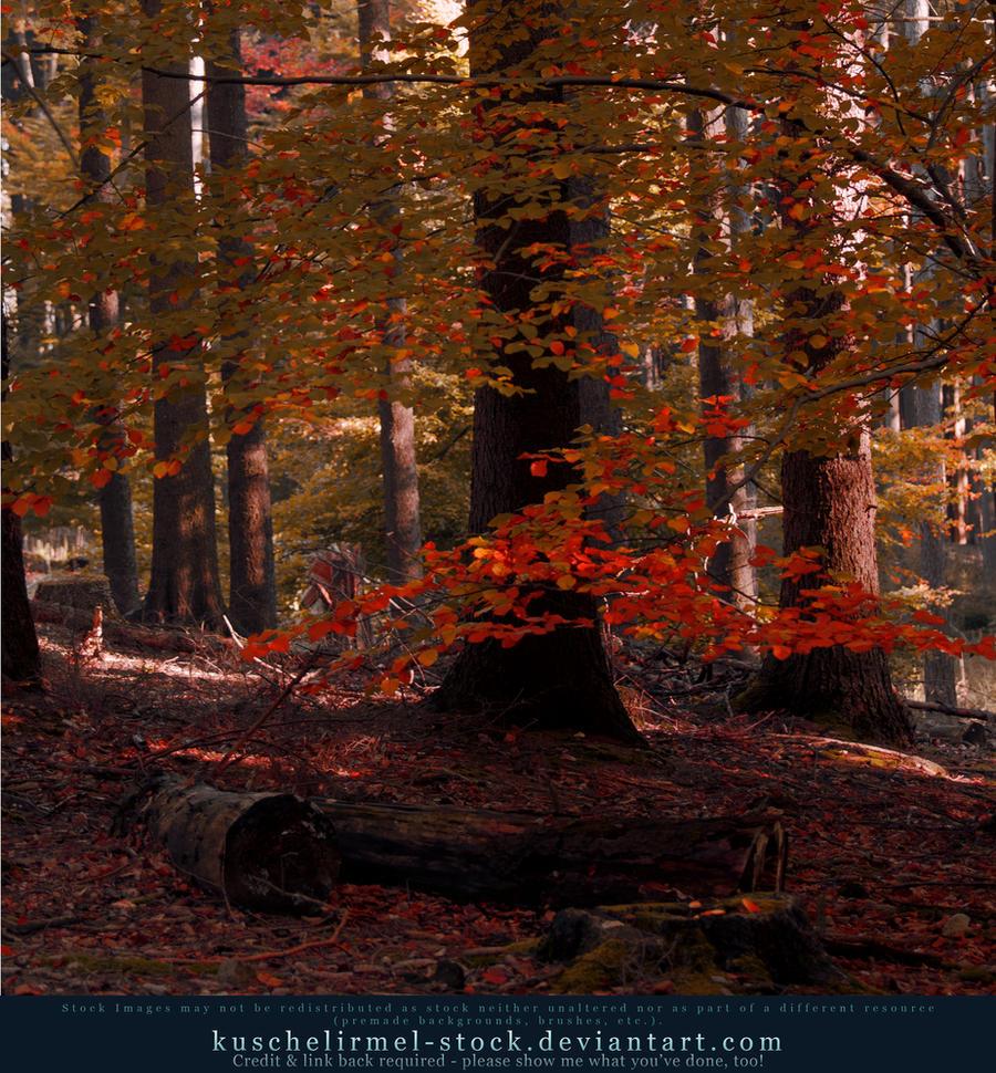 Autumn 02 by kuschelirmel-stock