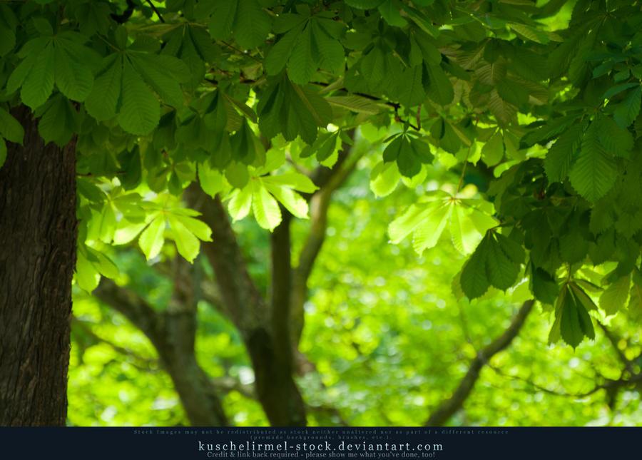 Foliage I by kuschelirmel-stock