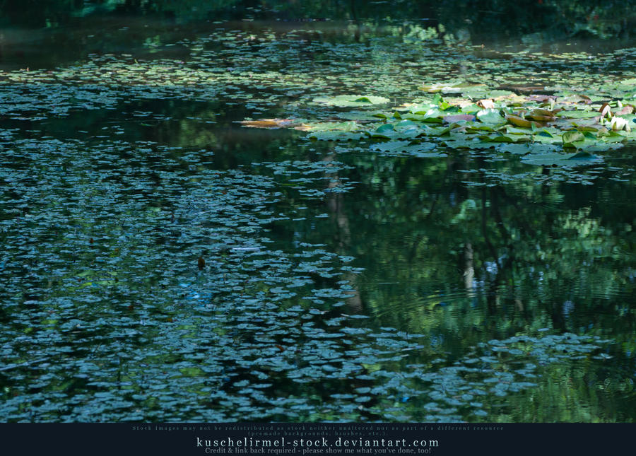 Lilly Pond I