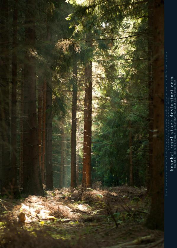 Herbstspaziergang I by kuschelirmel-stock