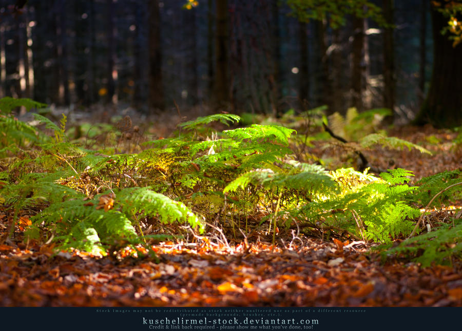 Herbstspaziergang II by kuschelirmel-stock