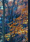 Herbstspaziergang III