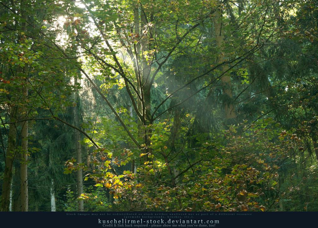sunlight through trees black - photo #30