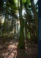 Rays of Sunlight behind a Tree by kuschelirmel-stock