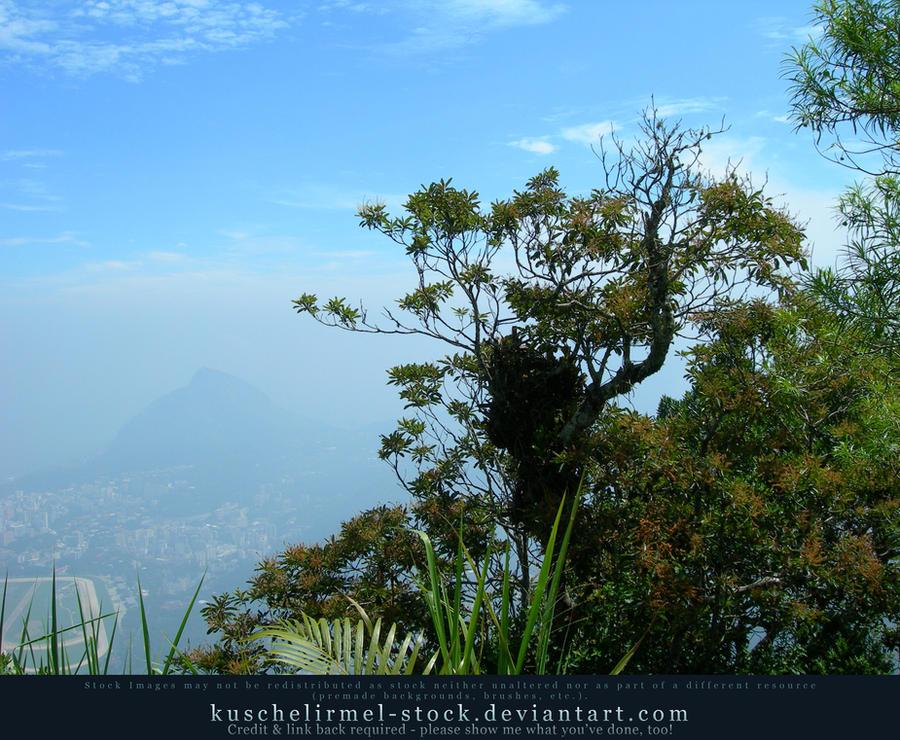 Foliage on Corcovado by kuschelirmel-stock