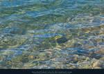 Water Surface Lake