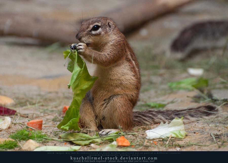 Lunch II by kuschelirmel-stock